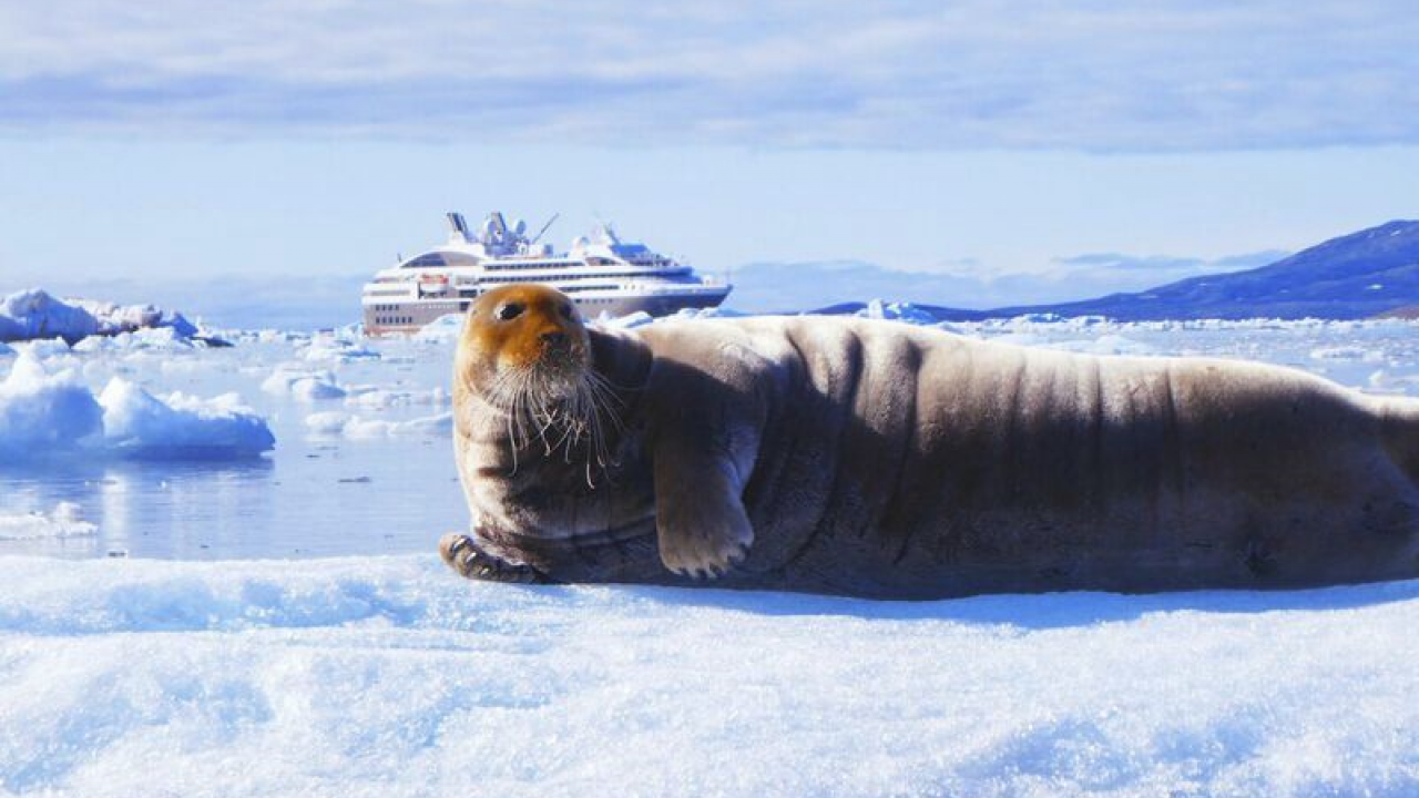 Arctic seal on the glacier front Kongsbreen