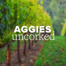 Aggies Uncorked logo placed on top of a photo of a vineyard